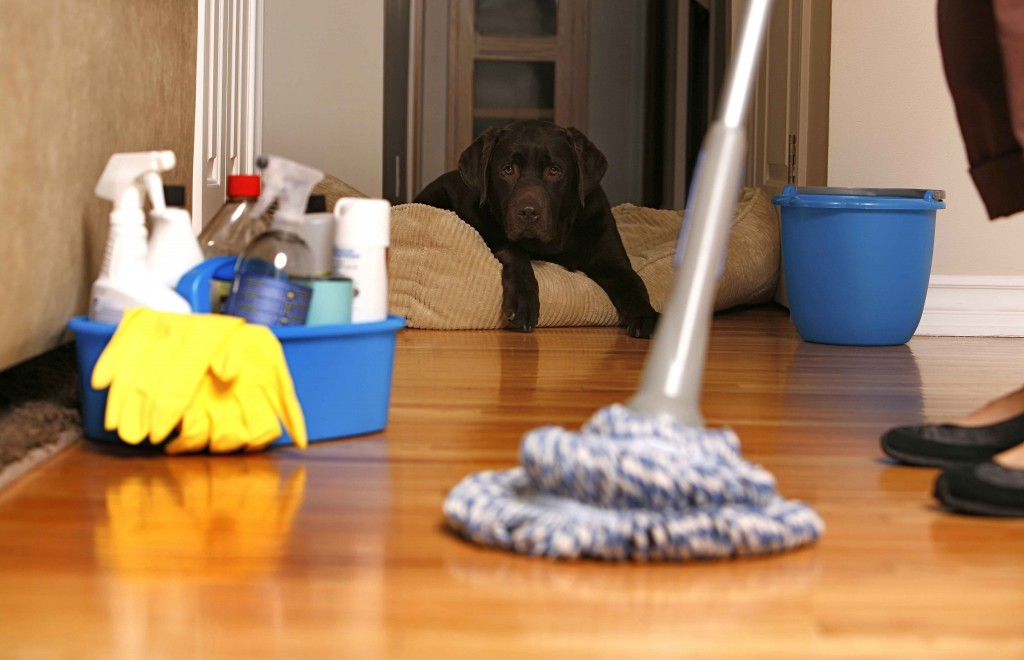 Cheap Cleaning Supplies For Your Home